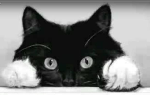 Как нарисовать кошку В Контакте