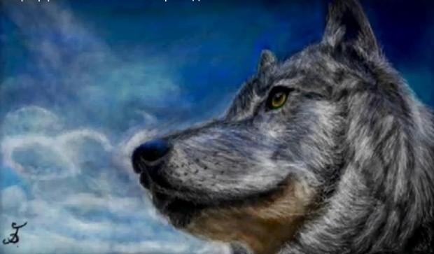 Граффити В Контакте - Волк
