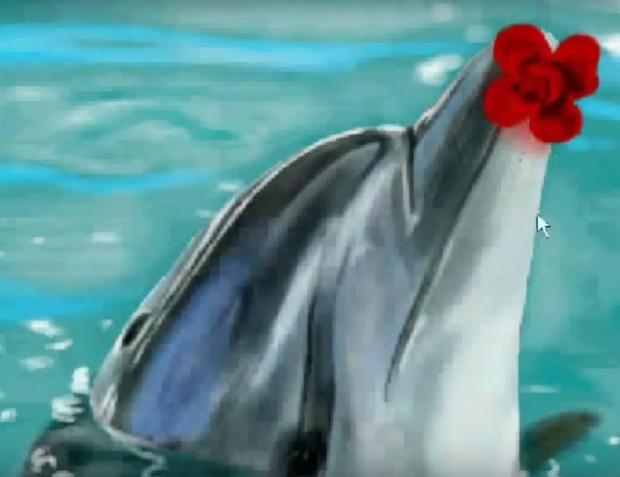 Граффити В Контакте - Дельфин