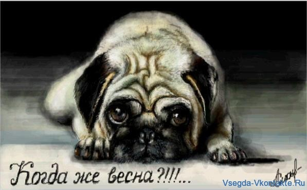 Живое граффити вконтакте Мопс